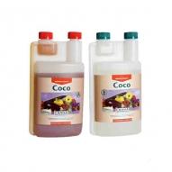 Coco B (Canna)