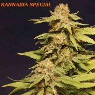 * Semillas Kannabia especial Kannabia