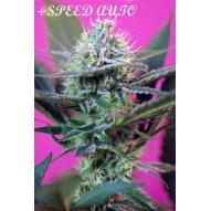 * Semillas speed auto sweet Seeds