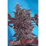 * Semillas Auto Black Cream Sweet Seeds
