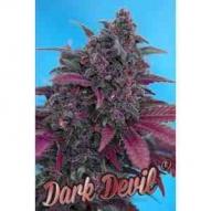 * Semillas Auto Dark Devil Sweet Seeds