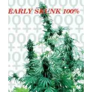 * Semillas Early Skunk Sensi Seeds