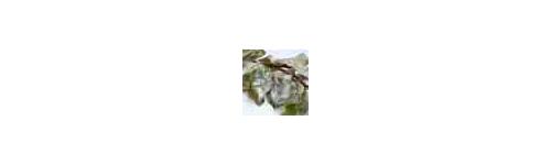 Fungicidas, Fungicidas-Acaricidas y Nematicidas