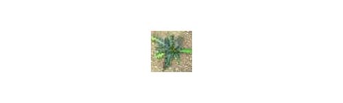 Herbicidas y Alguicidas